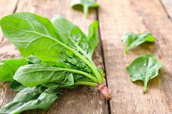 món ngon từ rau spinach
