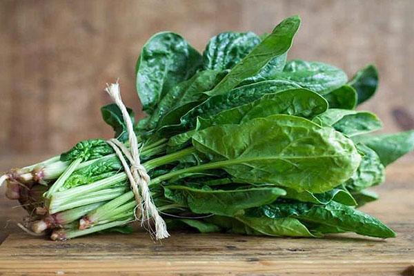 rau spinach là rau gì